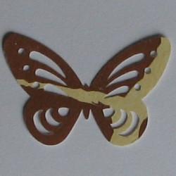 Paw print acetate ribbon