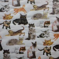 Cats & Kittens tissue paper